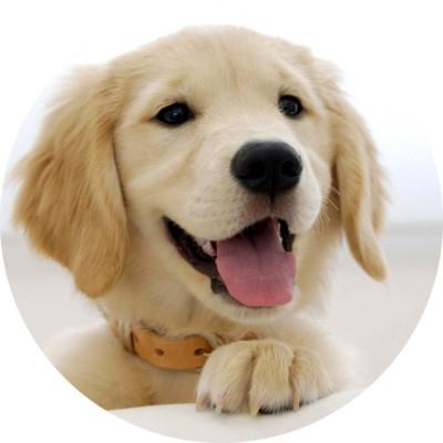 cialda per torta con immagine di un cane
