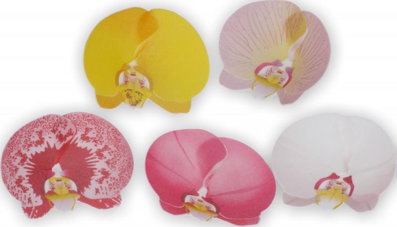 Orchidea 2 pz