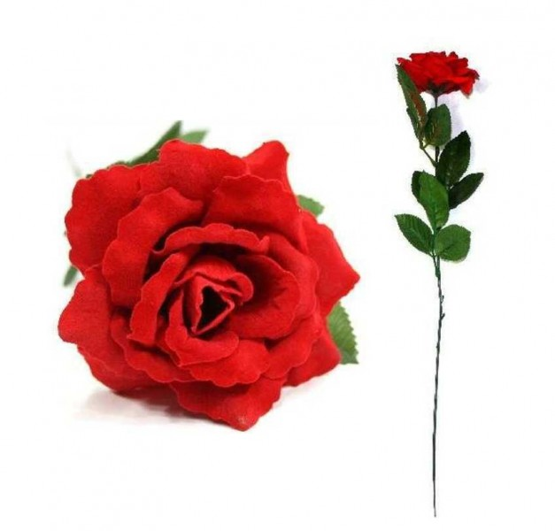Rosa rossa a stelo lungo